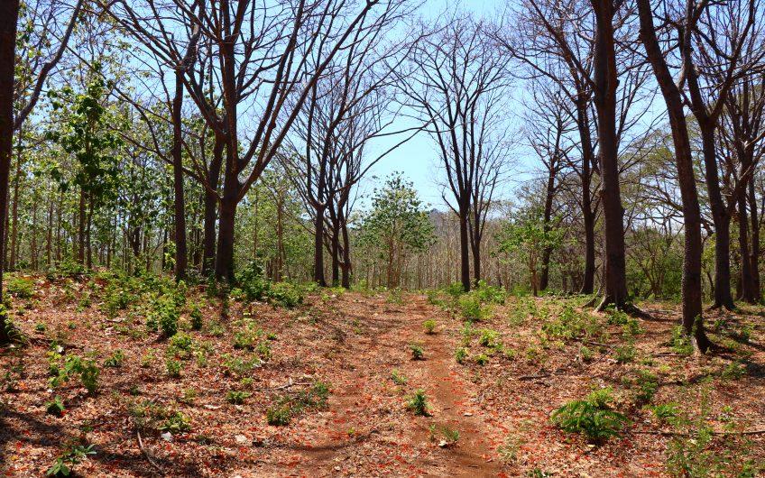 Grande propiedad de 6ha2875 M2 con maderas preciosas y maduras con teca, Melina y Pochote